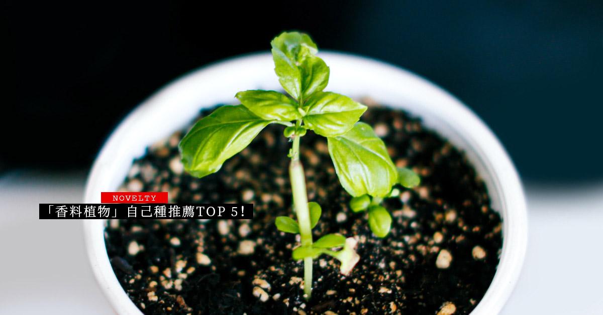 「香料植物」自己種推薦Top 5!新手從「薄荷」下手最容易,種「青蔥」須注意排水