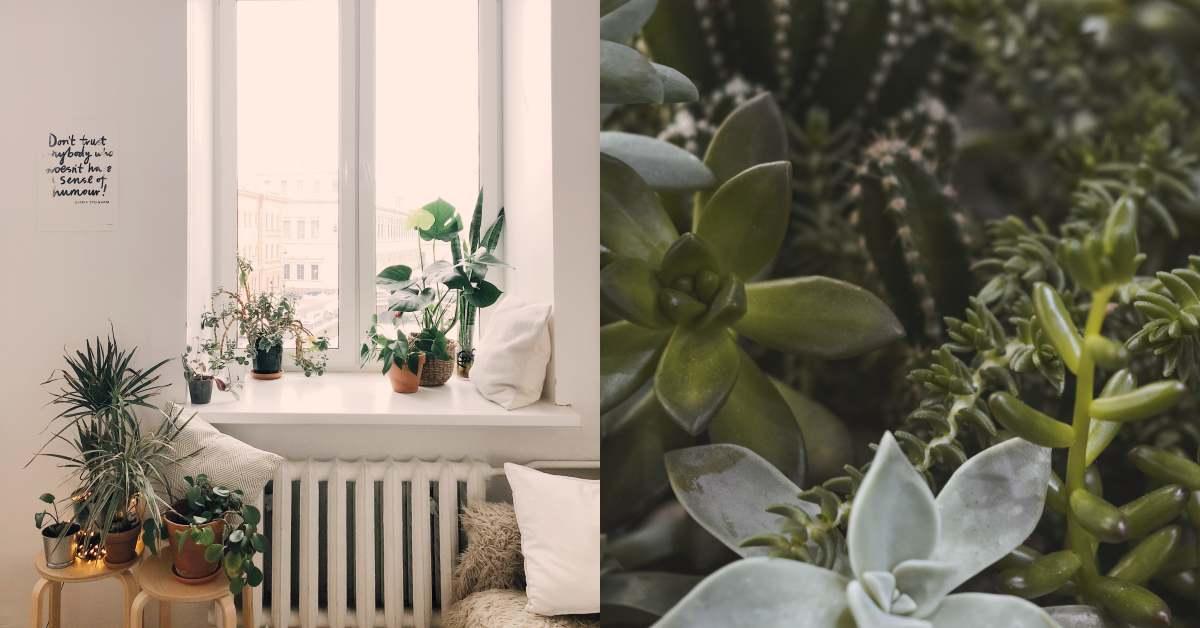 室內植物禁忌注意4點!假花是地雷,「開運竹」放錯反而會破財!