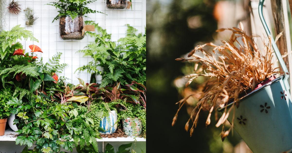 植物為什麼死掉?7種原因不能不知,澆水過量不是好事、室內植物容易染「根腐病」