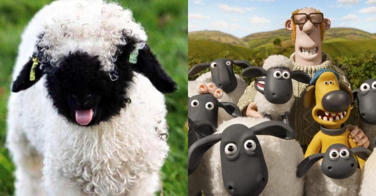 簡直世界可愛!會動的玩具綿羊「瓦萊黑鼻羊」讓人好想抱一隻回家