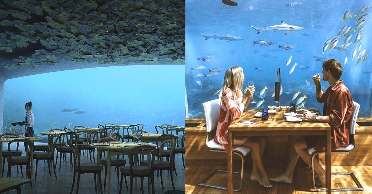 跟鯊魚來場浪漫的燭光晚餐!到這4間海底餐廳感受真正的「水底情深」吧~