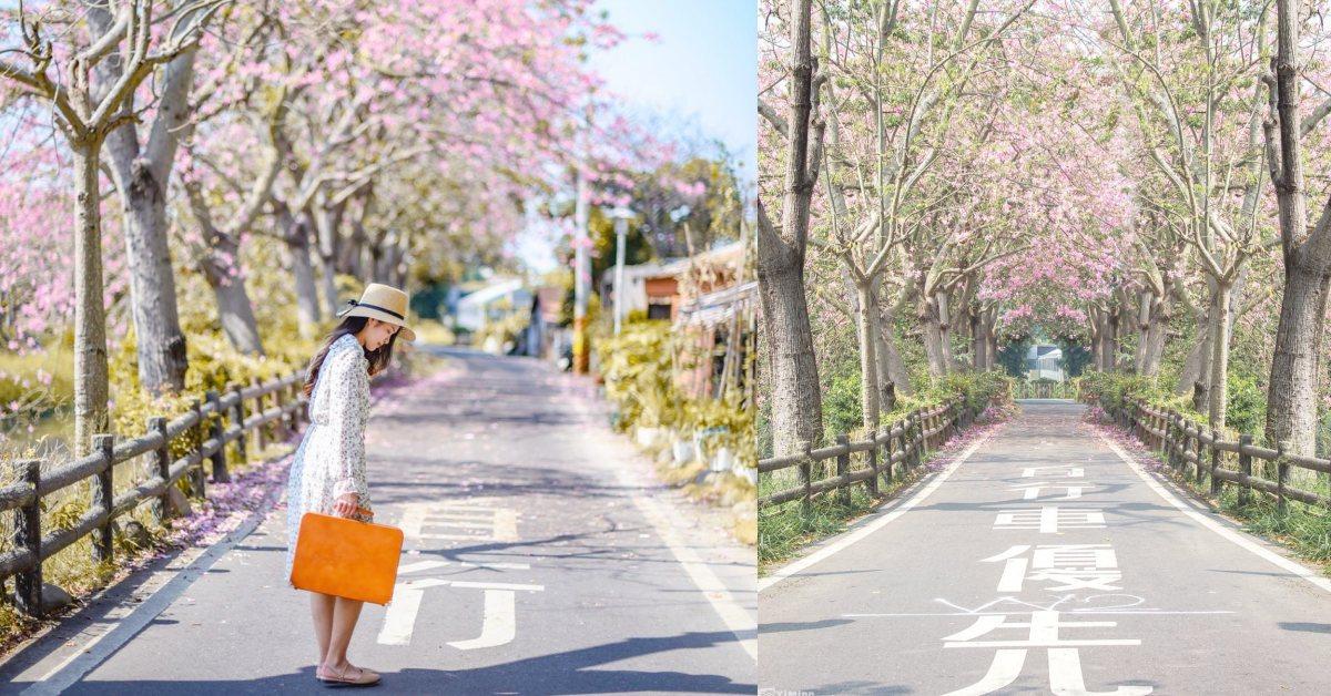 彰化IG景點「粉紅河堤」打卡爆紅!美人樹隧道讓你一秒走進韓劇場景