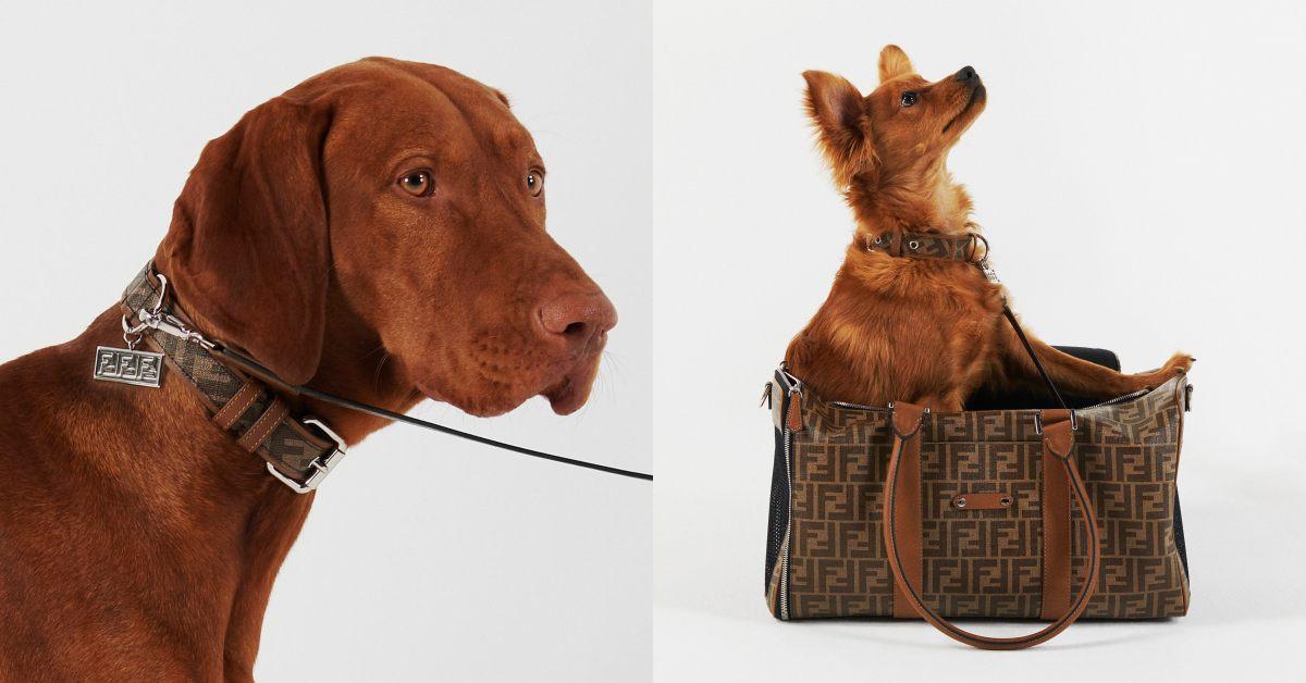 Fendi老花包包沒這個酷!寵物衣服、牽繩 、項圈套上FF Logo,外出提袋主人拿也很OK!