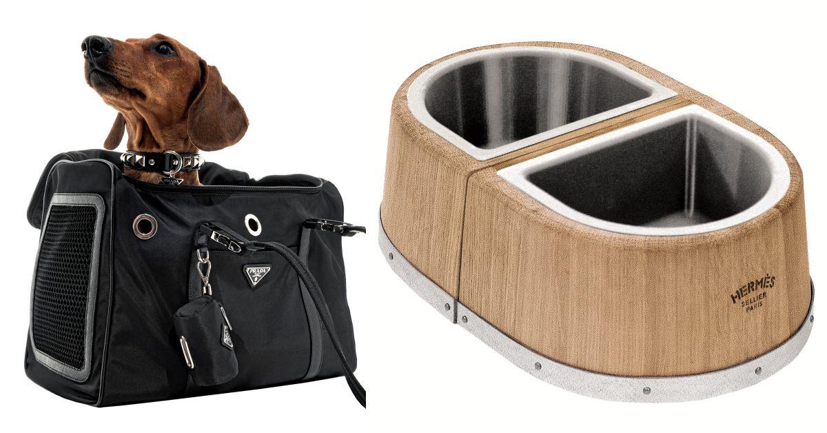 Hermès包包買完推薦買這個!毛小孩經濟太吸引人,Tiffany、Prada一線精品推出寵物用具