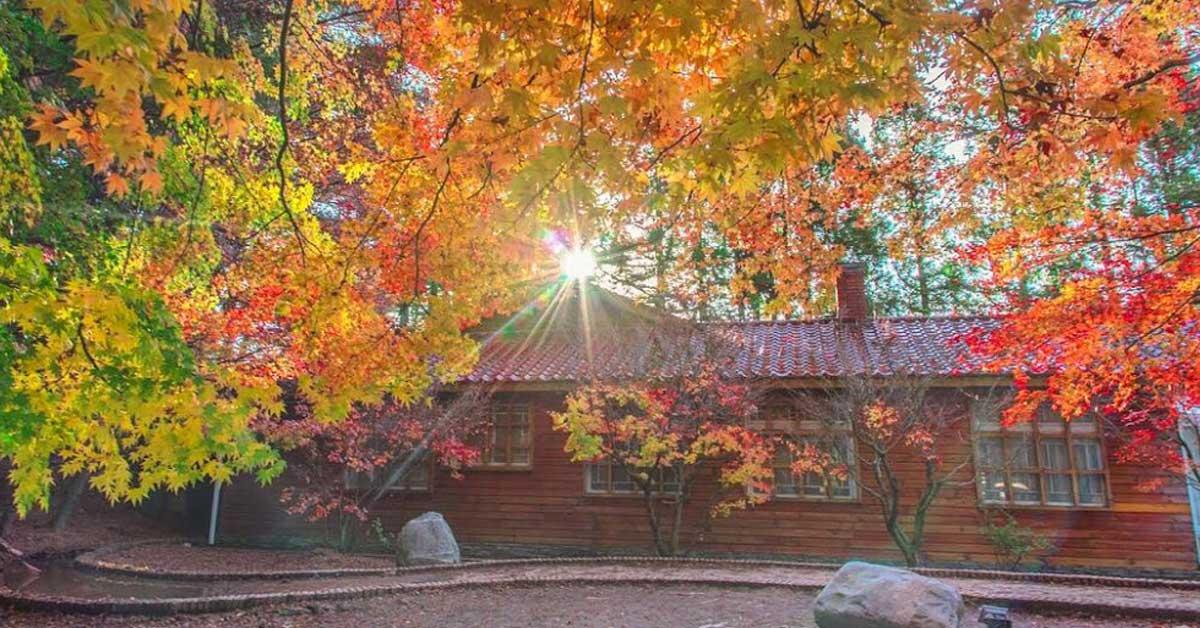 再猶豫就來不及了!台中「福壽山農場」楓葉大爆發,漫天火紅楓林 現在去最美!
