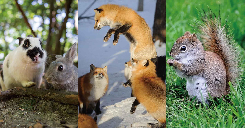除了貓島外,日本還是動物天堂!到兔子島、狐狸村、松鼠園療癒身心