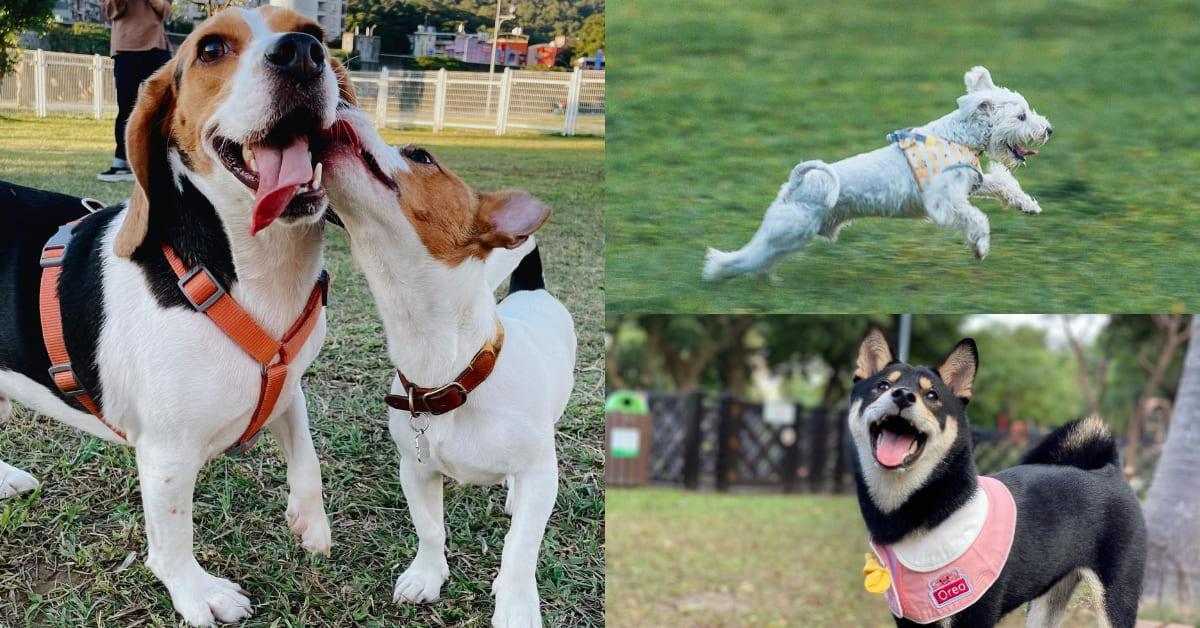 台北遛狗景點推薦Top5,超巨大草坪盡情跑跳,帶著毛小孩度過悠閒的假日吧!