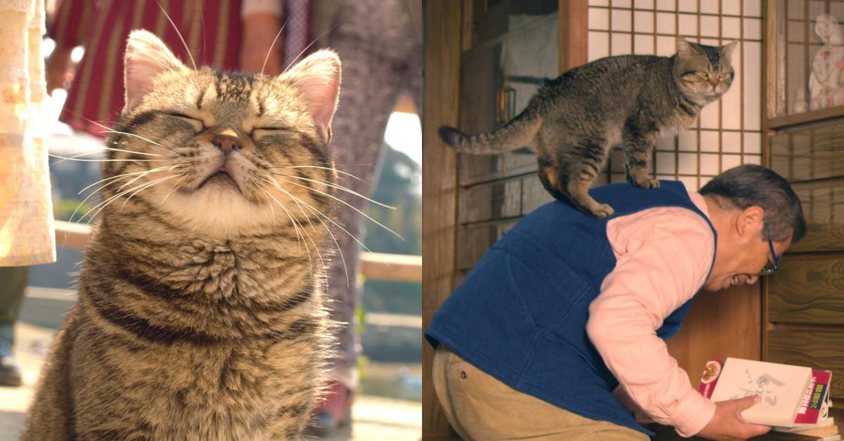 「你會陪我到最後吧?」相依為命的《爺爺與喵》獻給所有貓奴暖心催淚之作