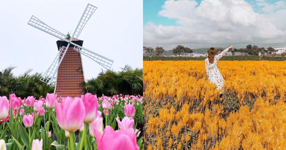 台中中社觀光花市「鬱金香花海」夢幻登場!8公頃、30萬株花朵,彷彿一秒到歐洲