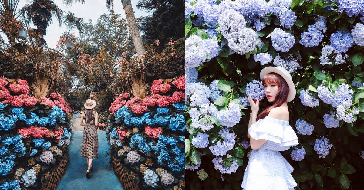 拍出網美照不是夢!夢幻繡球花持續盛開,全台必去的5個賞花景點特蒐