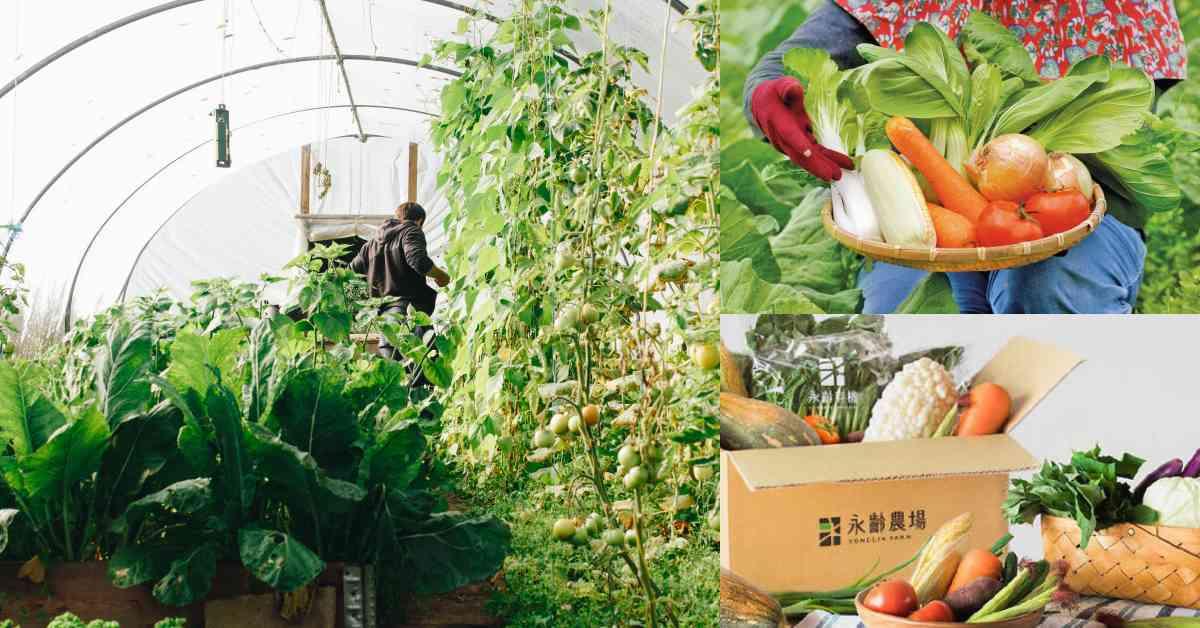 線上「有機蔬菜」推薦Top7!「北農嚴選」16樣蔬菜太澎湃,郭董「永齡農場」標榜全台最大有機園區