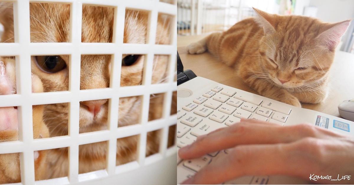 喵星人的世界你懂嗎?解析貓咪的7個小秘密,喜歡咬塑膠、鑽紙箱原因大公開!