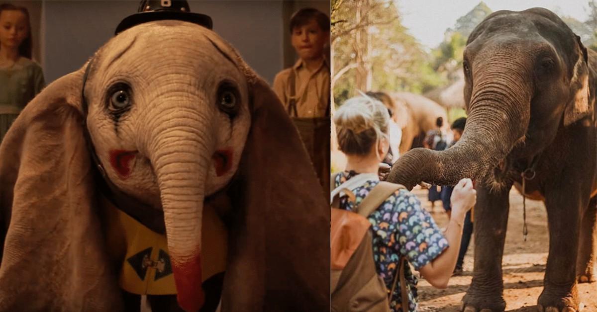 《小飛象》隱射人性之惡!去泰國這4處大象保育公園旅遊,「用照顧代替乘騎」
