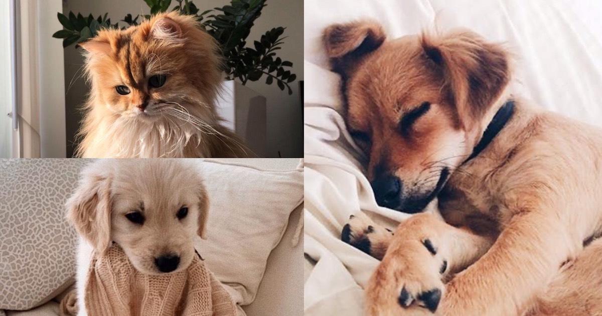 一直宅在家連寵物都憂鬱!「這4徵兆」要注意,防疫在家多陪伴,互相療癒度過疫情!