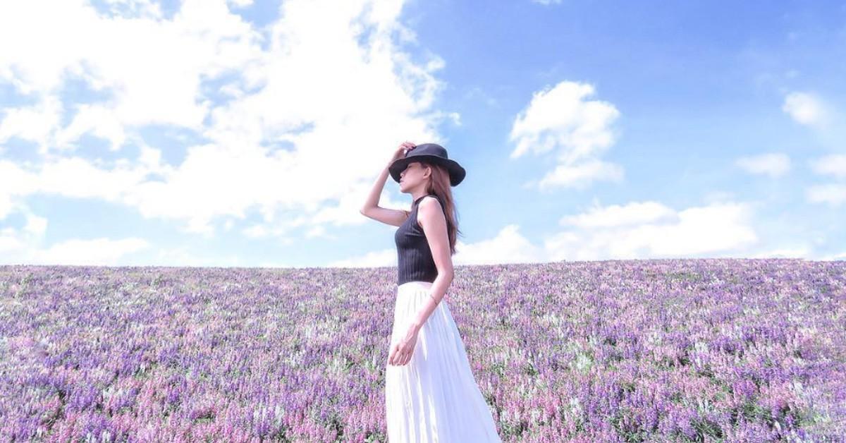 少女們尖叫吧!台北「仙境粉紫花海」現正花開中,夢幻花期一路開到明年2月底~