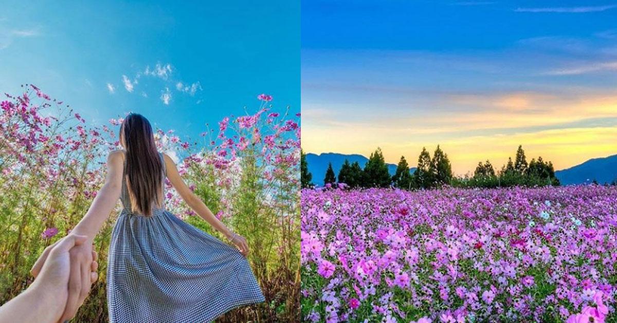 這裡拍照無敵美!全台5個秋天賞花打卡熱點揭秘!網友:隨手一拍都是仙境