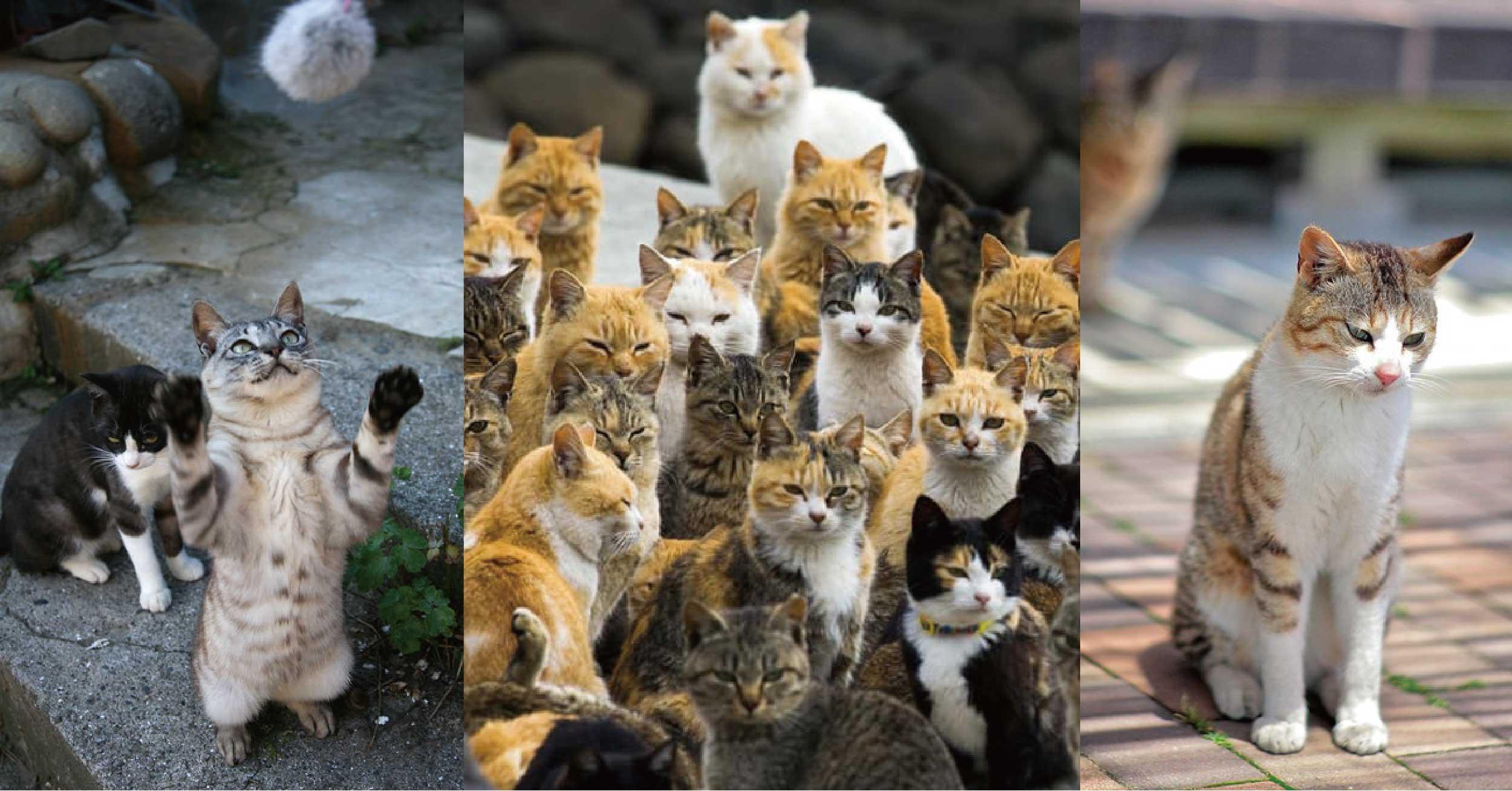 貓奴必去聖地!日本6大貓島推薦,吸貓、擼貓享受被喵星人包圍不是夢
