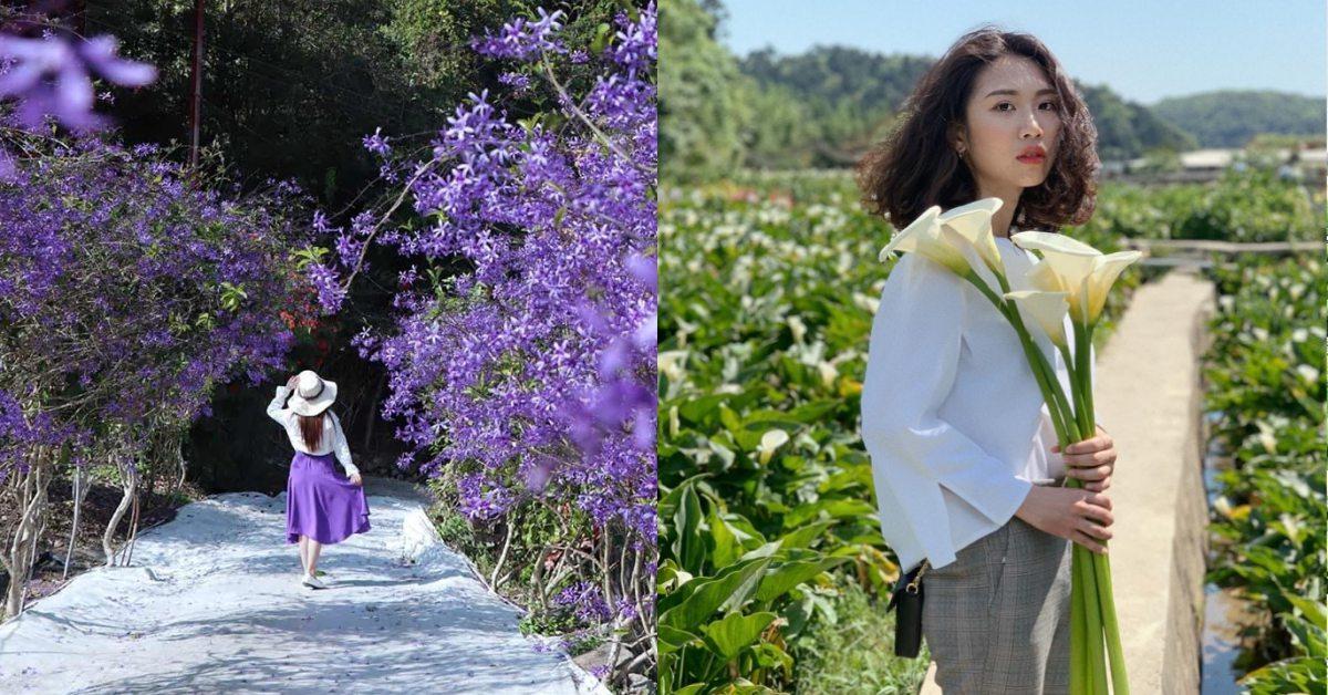 全台賞花攻略!浪漫櫻花、潔白海芋、紫色花廊,1-5月踏青景點推薦