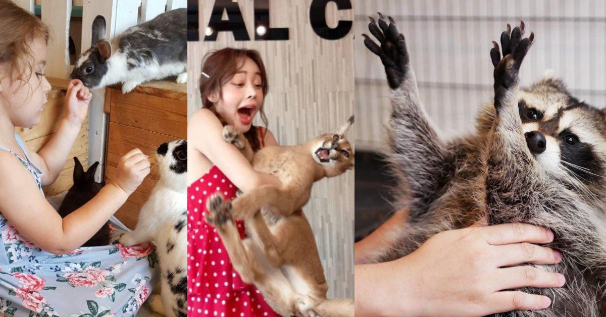 與浣熊、獰貓抱抱不是夢!泰國4家爆紅動物咖啡廳,一起被萌翻一下午