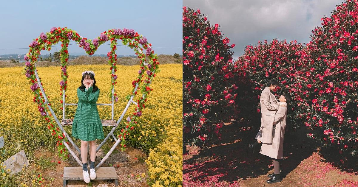 冬天也要來賞花!韓國濟州島3大必去景點讓你置身花仙世界