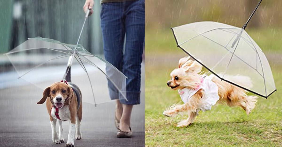 雨再大狗兒子也不能濕!專為毛小孩設計的「狗雨傘」,梅雨季也不怕
