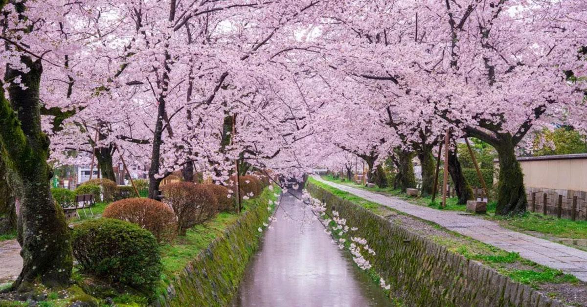 【日本】京都五天四夜規劃,清水寺、金閣寺、京都車站、和服,怎麼安排路線?