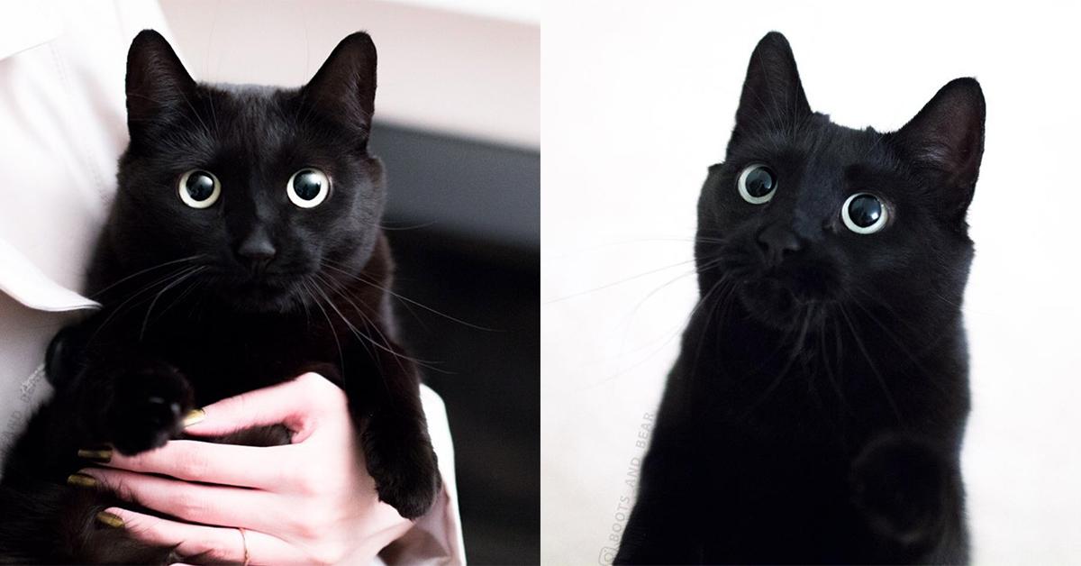 超可愛黑貓IG網紅報到!顛覆你對黑就是不吉利的刻板印象