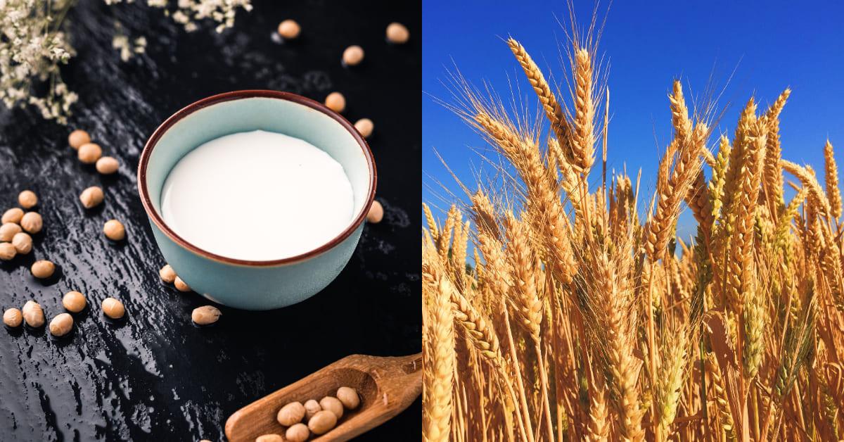 植物奶是什麼?可取代牛奶?有效控制三高、體重,營養師3大原則告訴你
