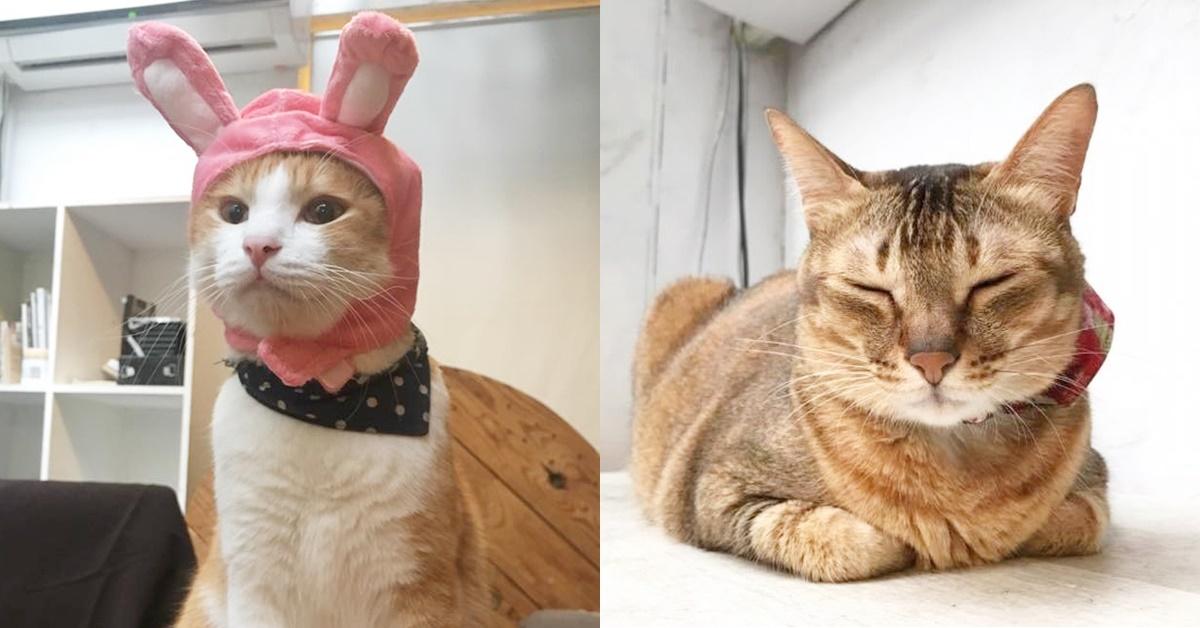下班就是要揉肥美貓肚肚!奴才們保證愛死的10大精選「貓咪咖啡廳」特搜