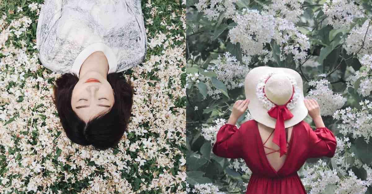 夏雪了!油桐花季提早綻放,苗栗「粉色漸層竹籤海」馬上約姐妹們一起來當花仙子