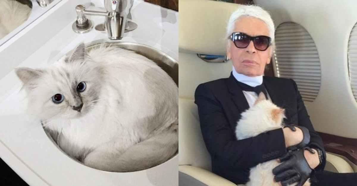 老佛爺親自掌鏡!卡爾拉格斐的愛貓Choupette的個人寫真即將上架!