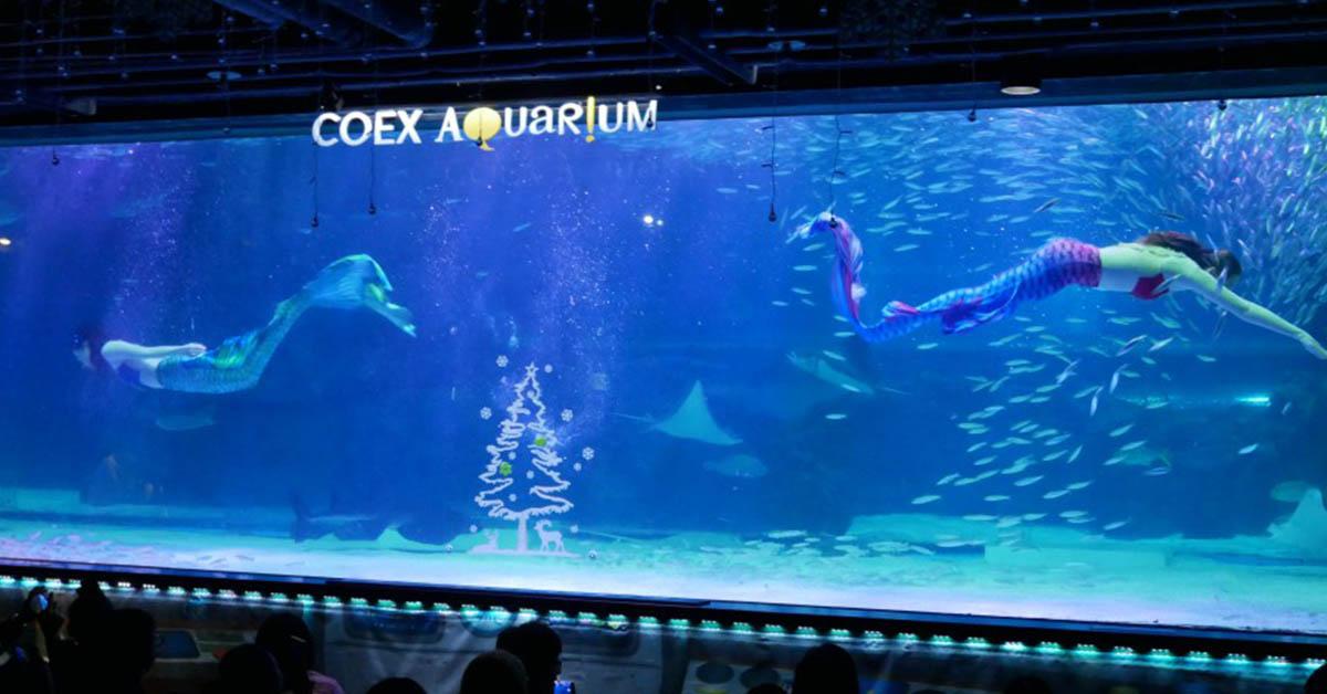 【韓國】首爾COEX水族館完整攻略:門票、交通、營業時間、主題展區介紹、美人魚表演、餵食表演時間