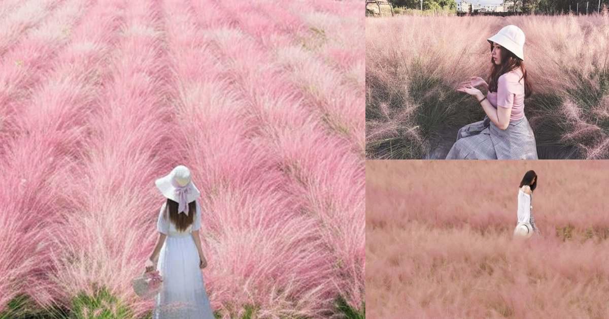 南投最新打卡景點!紫色薰衣草拍起來就像韓劇女主角,韓國機票先省下!