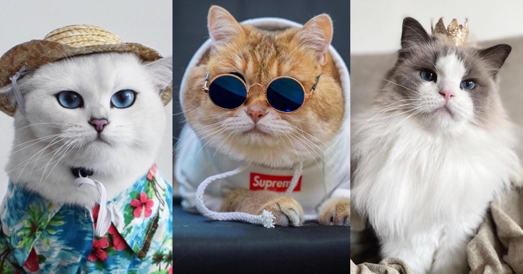 IG超人氣7隻貓咪網紅推薦!下班紓壓最佳良藥,療癒、可愛激萌樣一秒融化
