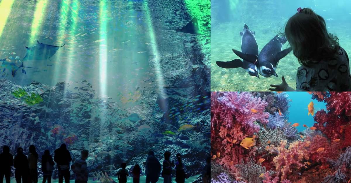 桃園青浦Xpark水族館要開啦!2020最讓人期待的遊樂設施,開幕日、票價、亮點一次曝光!