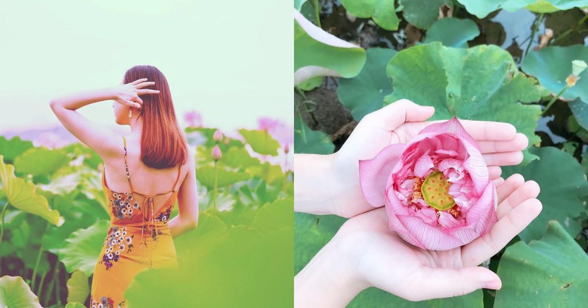 7月將邁入荷花盛開期!台北5處賞荷、賞蓮仙女池打卡去處推薦