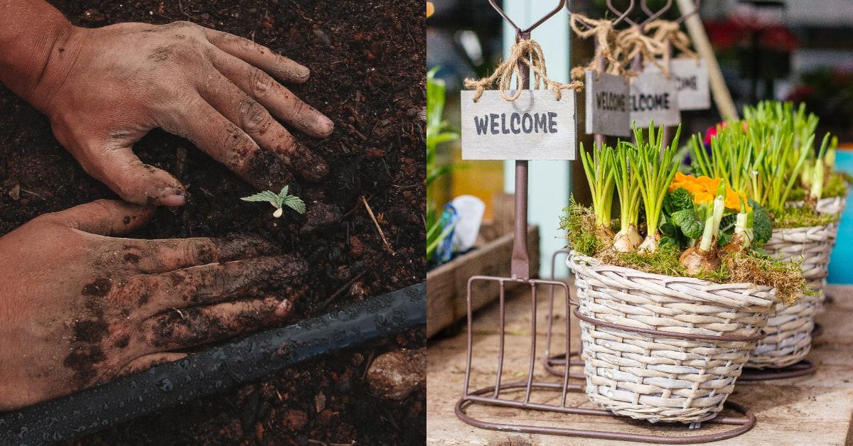 「陽台蔬菜」新手推薦從這5種下手!小白菜四季皆宜收成快,地瓜葉要種OK但不要買地瓜!