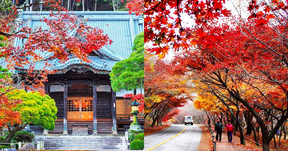 都開好等你了!日本伊豆半島、韓國雪嶽山紅葉盛綻,走訪日韓楓葉5處這樣看入門篇~