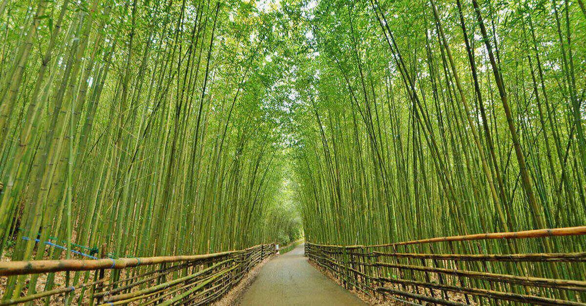 【揪食。愛玩專欄】苗栗竹林秘境美翻!以為來到京都嵐山讓妳拍、不、完
