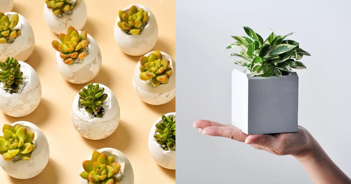 盆栽線上購物推薦這5家!「多肉植物」文青界小有名氣,新手可從「2Ustyle」開始