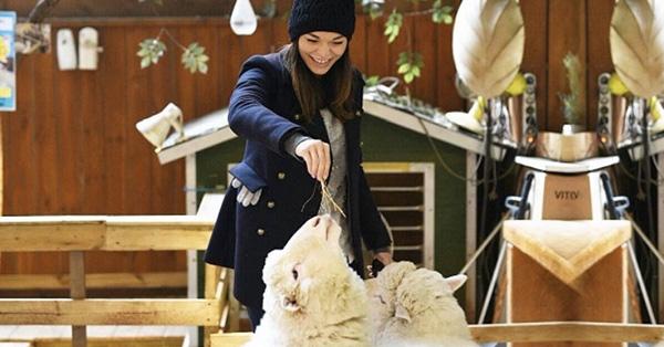 韓國弘大4間動物咖啡廳!超萌綿羊、浣熊、狐獴將你包圍