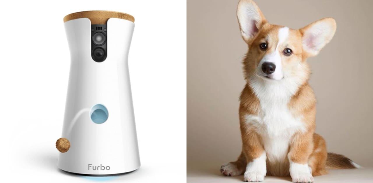 Furbo寵物保姆太方便!上班、上課也能遠端跟毛小孩互動,餵食、拍照都可以!