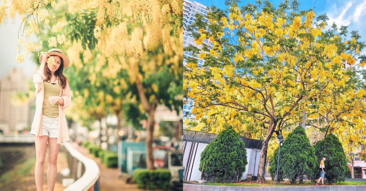 2021阿勃勒花季,台中賞花5大絕佳景點,迎接初夏黃金雨!