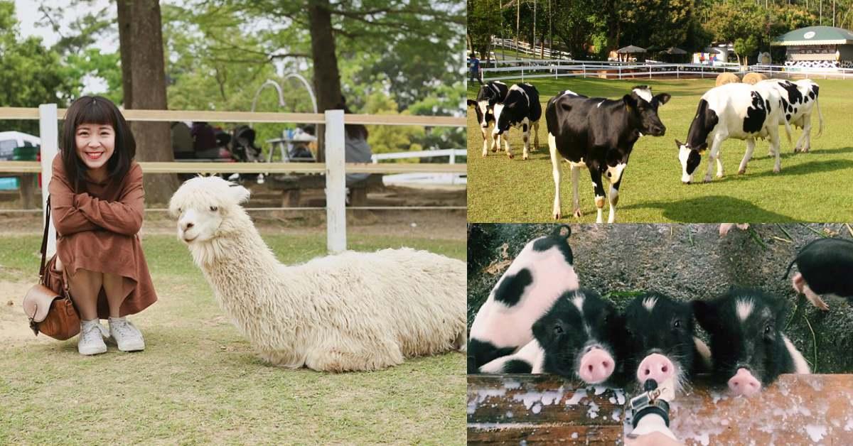 春節踏青首選!全台5處大人小孩都適合的「牧場推薦」,與草泥馬、水獺君零距離互動