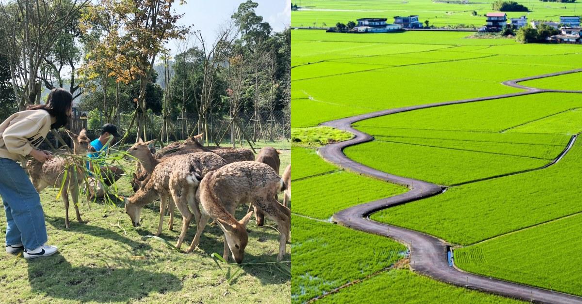 遠離台北塵囂!到宜蘭版伯朗大道拍照、《斑比山丘》跟小鹿近距離接觸
