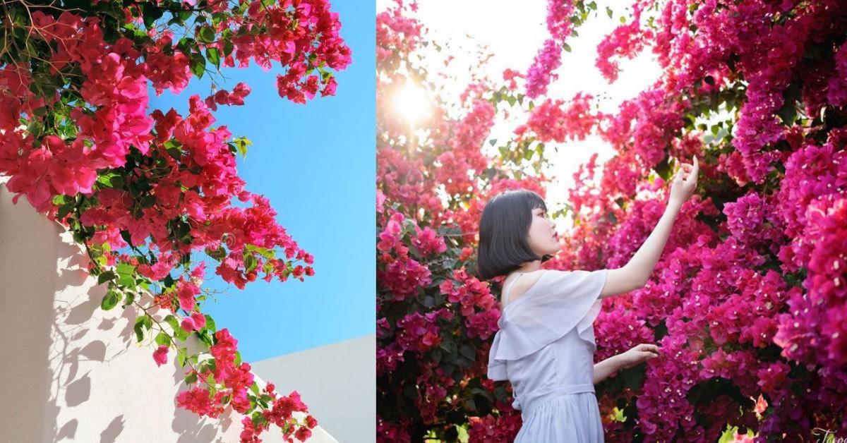 全台「九重葛」絕美秘境!6個賞花景點整理小希臘花牆、粉色漸層花海,IG美照都在這拍!