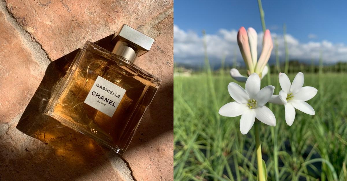 直擊法國格拉斯花田,揭開香奈兒嘉柏麗香水的秘密!你噴的香水竟是這樣來的?