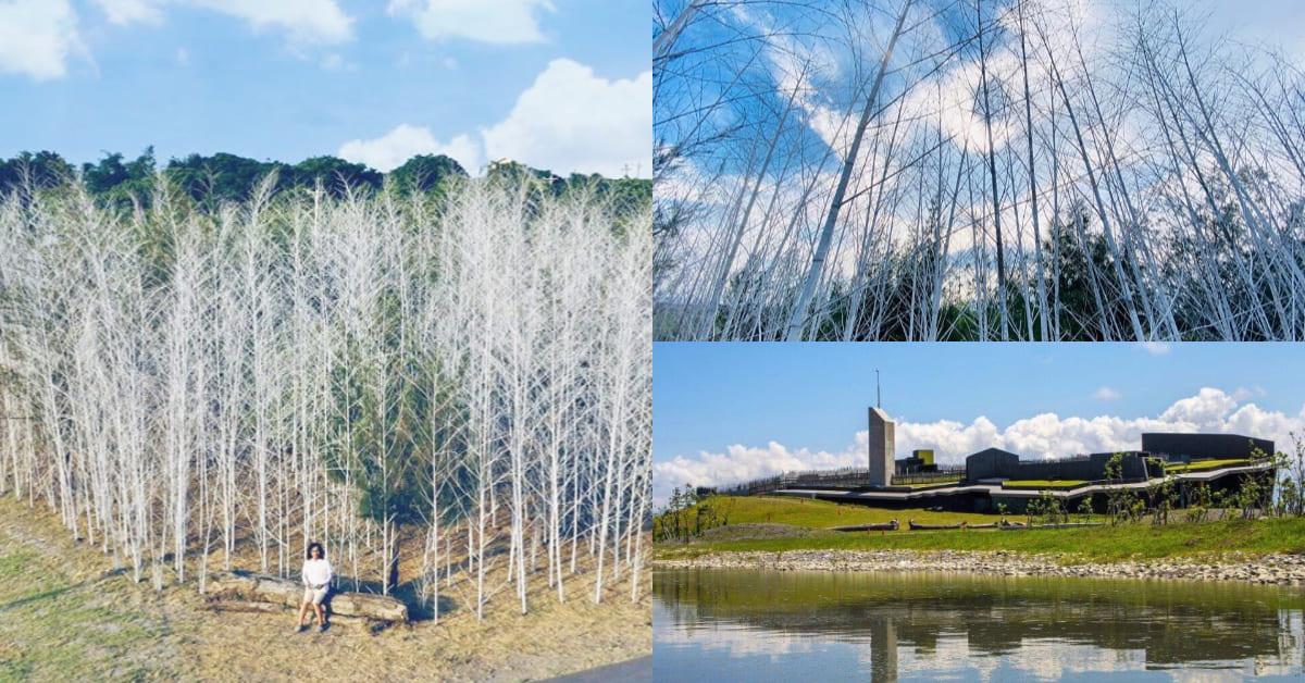 2020壯圍沙丘藝術節開跑,《迷霧森林》最吸睛!冰天雪地太好拍,彷彿走入《納尼亞傳奇》