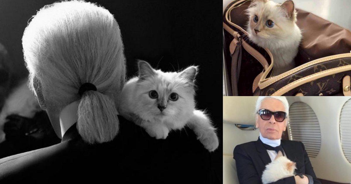 卡爾養出全球最有錢的喵星人?老佛爺甘成貓奴寵貓無極限的10大超狂事蹟