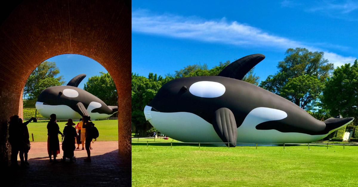 台南虎鯨你拍了沒?全球最大、20公尺「虎鯨ORCA」期間限定呆萌登場